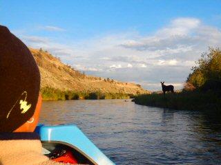 blog-July-14-&-15-2015-2-moose