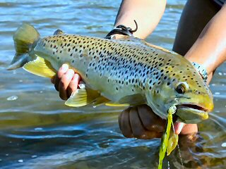 blog-July-14-&-15-2015-4-flyfishing-for-brown-trout