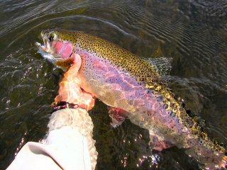 blog-July-17-2015-6-flyfishing-island-park-reservoir