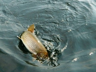 blog-June-24-2015-6-flyfishing-for-laketrout
