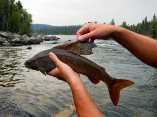 blog-June-27-2015-14-flyfishing-for-arctic-grayling
