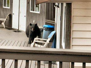blog-June-29-2015-2-black-bear