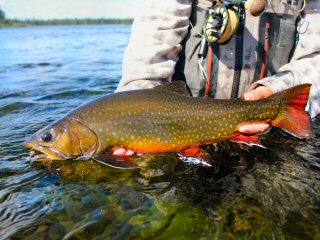 Adventures fly fishing in Labrador