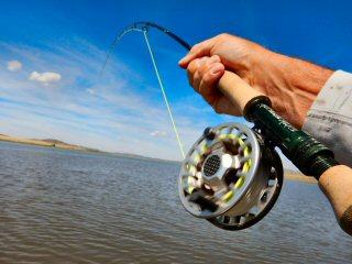 blog-Aug-28-2015-3-blackfoot-reservoir-carp