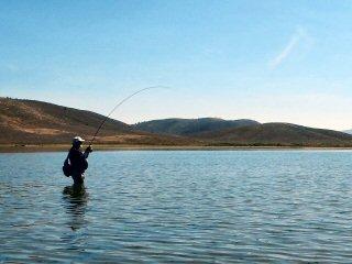 blog-Aug-28-2015-6-fly-fishing-carp