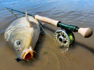 blog-Aug-28-2015-7-flyfishing-for-carp
