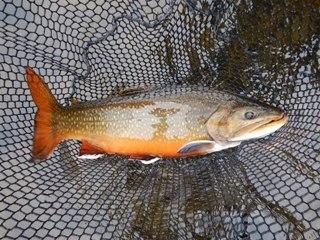 blog-Aug-3-2015-11-jeff-currier-flyfishing-labrador