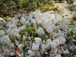 blog-Aug-4-2015-2-lichens-and-mushrooms-of-labrador