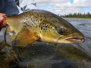blog-Aug-4-2015-8-flyfishing-landlocked-salmon-in-labrador