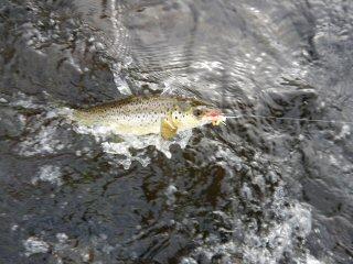 blog-Aug-5-2015-10-landlocked-salmon-fishing