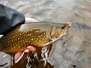 blog-Aug-6-2015-6-labrador-brook-trout
