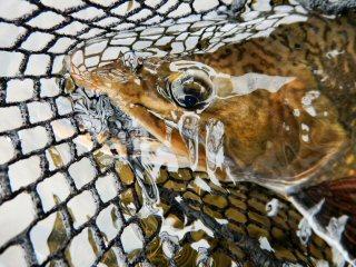 blog-Aug-6-2015-8-flyfishing-in-labrador