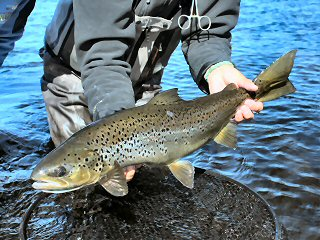 blog-Aug-7-2015-8-landlocked-salmon