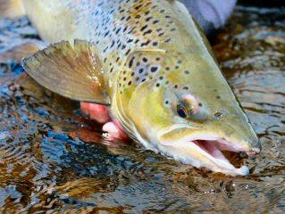 blog-Aug-7-2015-9-ouananiche-salmon