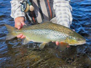 blog-Aug-8-2015-10-landlocked-salmon