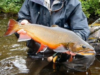 blog-Aug-8-2015-13-terminator-brook-trout