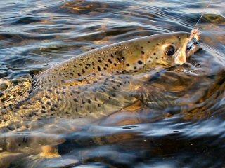 blog-Aug-8-2015-3-ouananiche-salmon-labrador