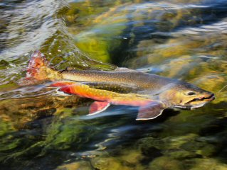 blog-Aug-8-2015-5-brooktrout-fishing-in-labrador