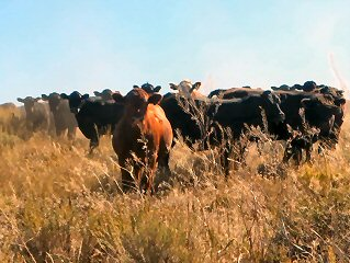 blog-Sept-11-2015-5-cows-and-fishing
