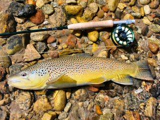 blog-Sept-9-2015-8-flyfishing-texas
