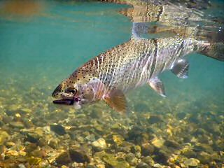 blog-Sept-9-2015-9-flyfishing-for-rainbow-trout