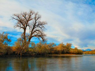 blog-Oct-26-2015-8-bighorn-river