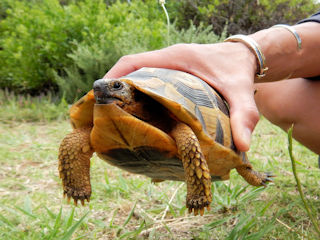 blog-Nov-14-2015-3-box-turtle
