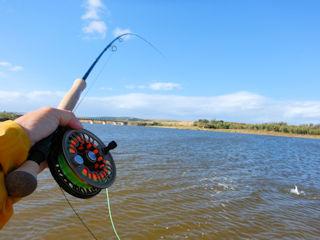 blog-Nov-14-2015-9-flyfishing-mussel-bay-sa