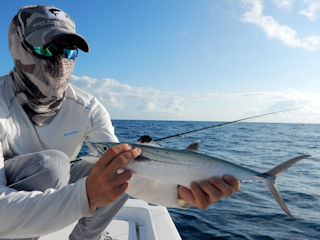 blog-Nov-1b-2015-7-spanish-mackerel