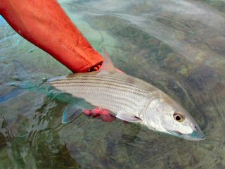 blog-Nov-2-2015-6-key-west-bonefishing