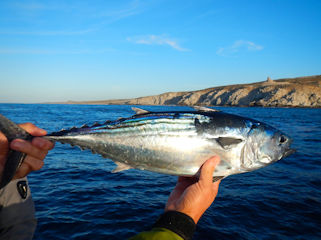 blog-Dec-16-2015-2-jeff-currier-flyfishing-tuna