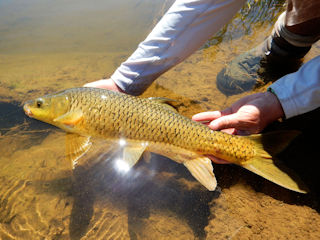 blog-Nov-16-2015-5-flyfishing-for-yellowfish