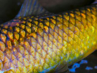 blog-Nov-19-2015-1-flyfishing-for-yellowfish