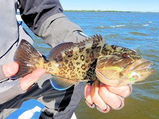 blog-Feb-5-2016-8-flyfishing-for-gag-grouper