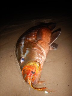 blog-March-21-2016-15-flyfishing-for-bubera-snapper
