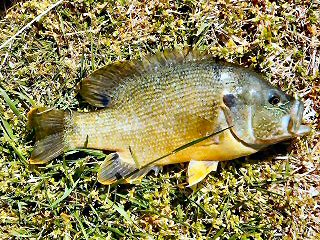 blog-April-18-2016-4-flyfishing-for-tilapia