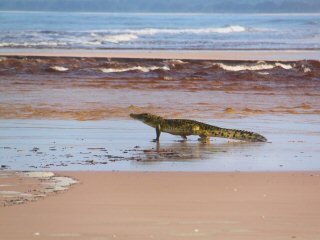 blog-March-27-2016-5-gabon-crocodile