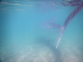 blog-May-15-2016-11-jeff-currier-whaleshark