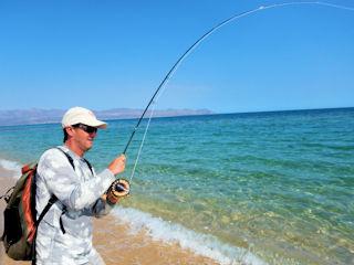 blog-May-16-2016-3-jeff-currier-roosterfishing-baja