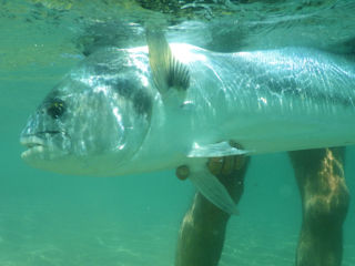blog-May-19-2016-5-flyfishing-baja-for-roosterfish