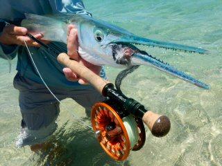 blog-May-20-2016-4-giant-needlefish
