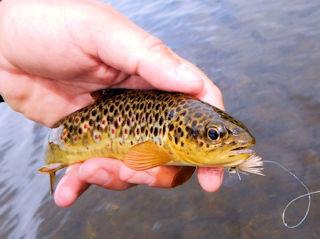 blog-June-11-2016-3-wild-brown-trout-in-ireland