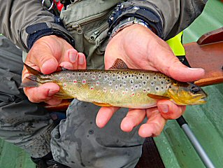 blog-June-14-2016-6-brown-trout-in-ireland