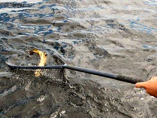 blog-June-15-2016-5-flyfishing-championships-ireland