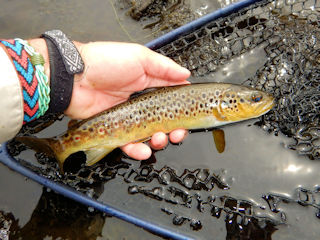 blog-June-9-2016-7-brown-trout-in-Ireland