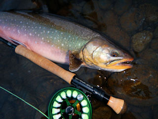 blog-Aug-20-2016-13-arctic-char-fishing