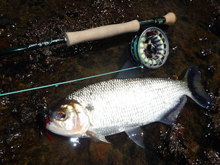 blog-Aug-5-2016-5-flyfishing-for-matrinxa