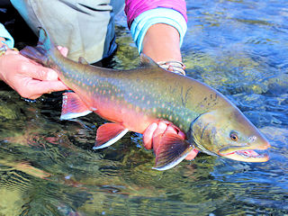 blog-Aug-22-2016-5-flyfishing-for-arctic-char
