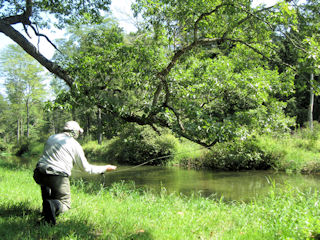 blog-sept-4-2016-3-flyfishing-spruce-creek