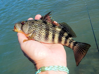 blog-oct-15-2016-4-spotted-bay-bass
